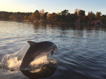 Delfiner på besök